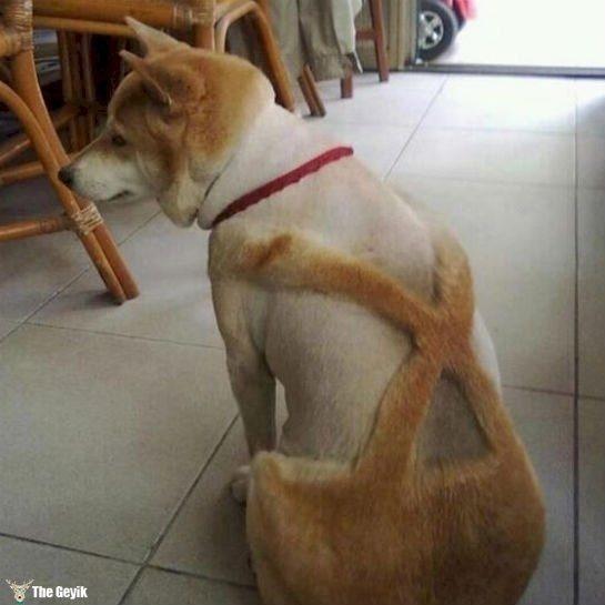 Komik köpek kedi traşları kuaför 11
