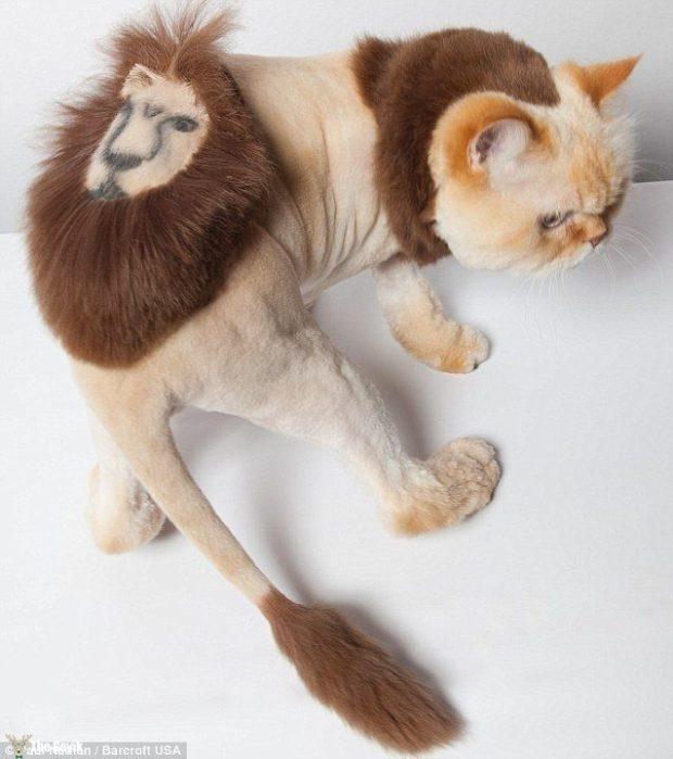 Komik köpek kedi traşları kuaför