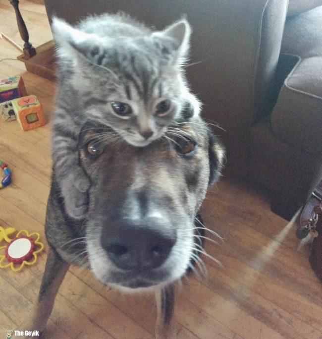 dost olan kedi ve kopekler4