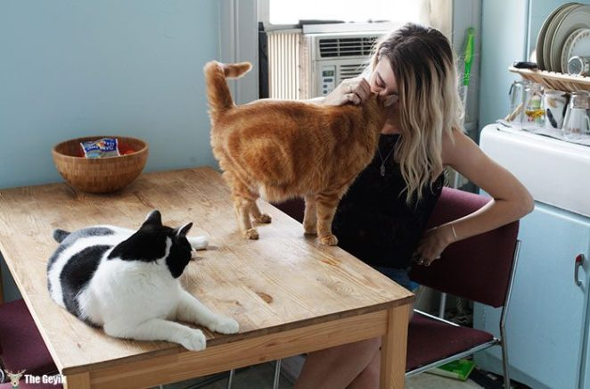 My-photo-series-of-Girls-and-Their-Cats-on-Instagram.__700