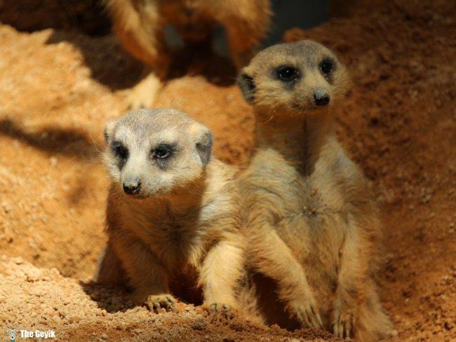 bebek hayvanlar 10