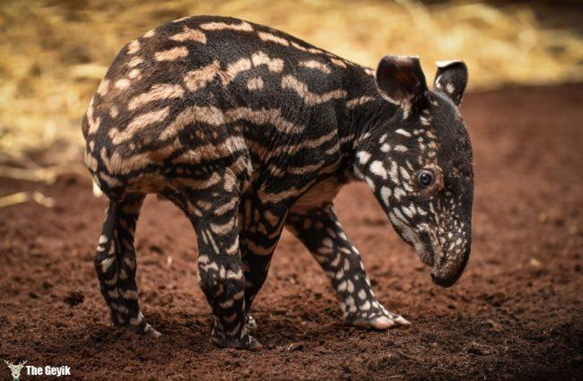 bebek hayvanlar 4