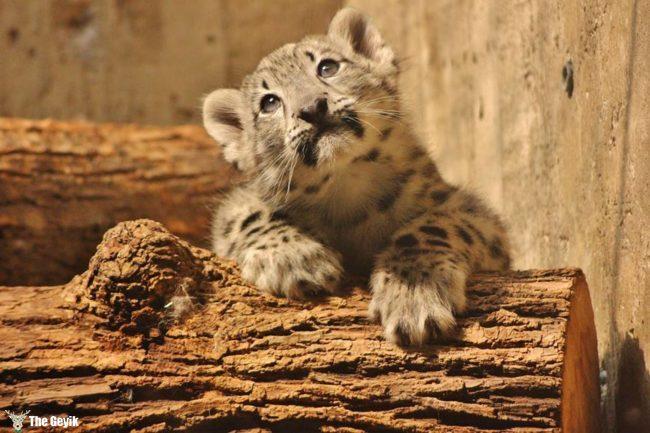 bebek hayvanlar 5