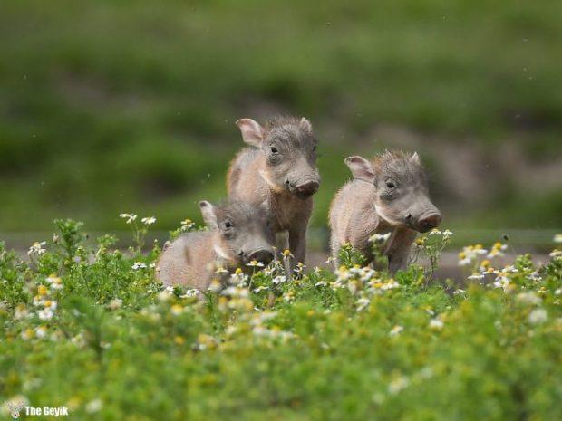 bebek hayvanlar 6