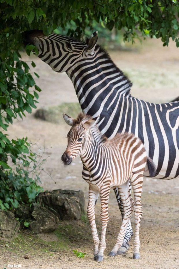 bebek hayvanlar 7