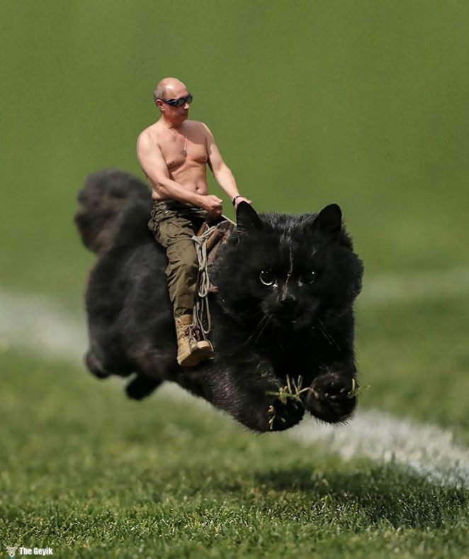 flying-cat-rugby-game-photoshop-battle-13-5784a38be81fa-png__700