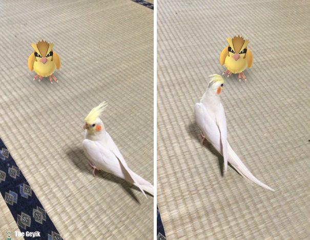 hayvanlar pokemon go görebiliyor 2