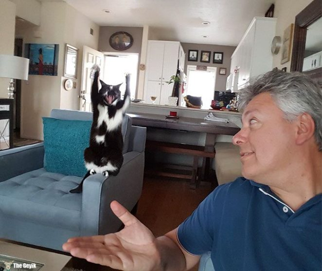 teslim olan kedi2