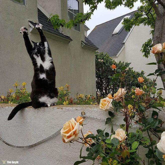 teslim olan kedi4