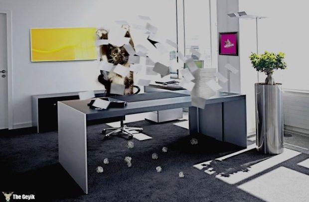 ayakta duran kedi komik photoshop battle 4