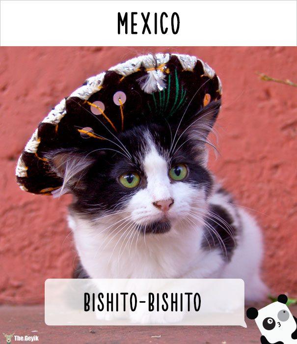 insanlar kedileri diğer dillerde nasıl çağırıyor 20