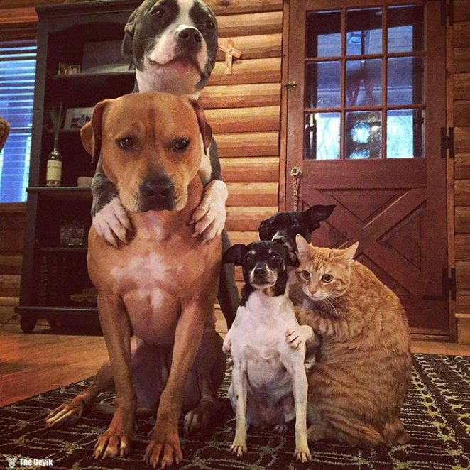 unusual-animal-friendship-dogs-cat-ducks-kasey-and-her-pack-32