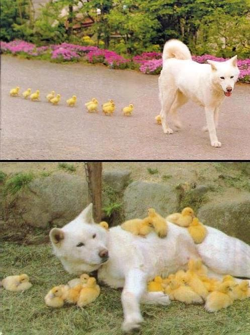 iyi-hayvanlar-1