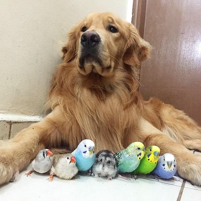 iyi-hayvanlar-8