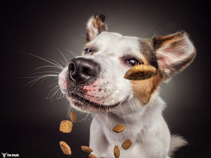 dog-catch-treats-10