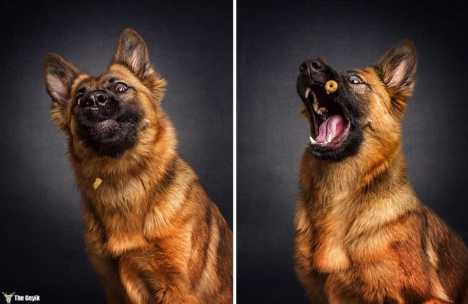 dogs-catching-food-photos-frei-schnauze-christian-vieler-29