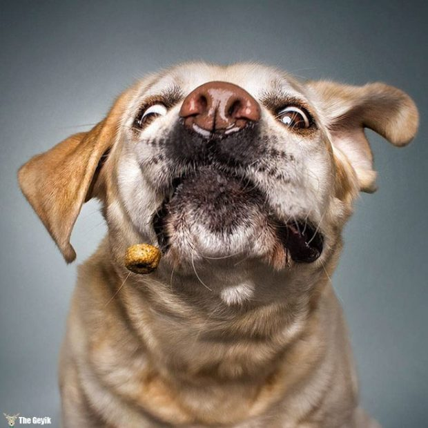 funny-dog-face5