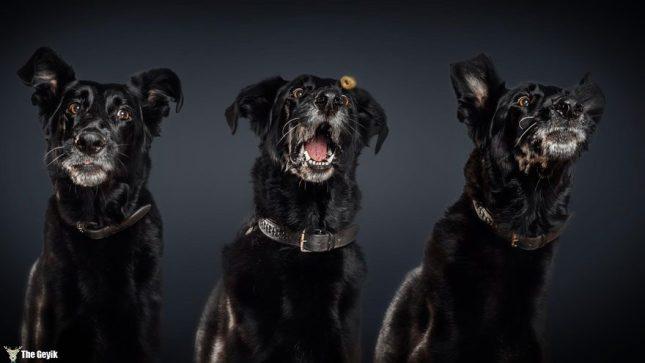 funny-dogs-catching-food-fotos-frei-schnauze-christian-vieler-18