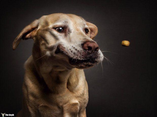 funny-dogs-catching-food-fotos-frei-schnauze-christian-vieler-6