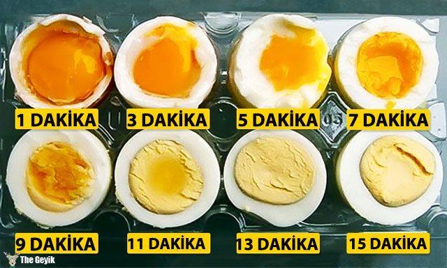 yumurta-nasil-haslanir