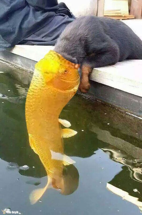 kiss8