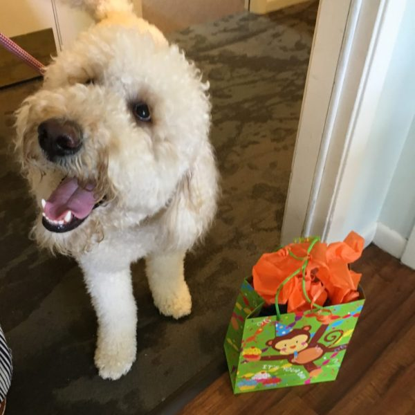 Mac, the dog from Ronald McDonald House of Arkansas with his birthday present - A Look Back at My Time as McDambassador - The Gifted Gabber
