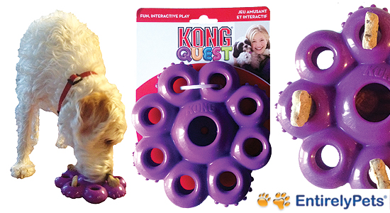 kong_dog_toy_entirely_pets