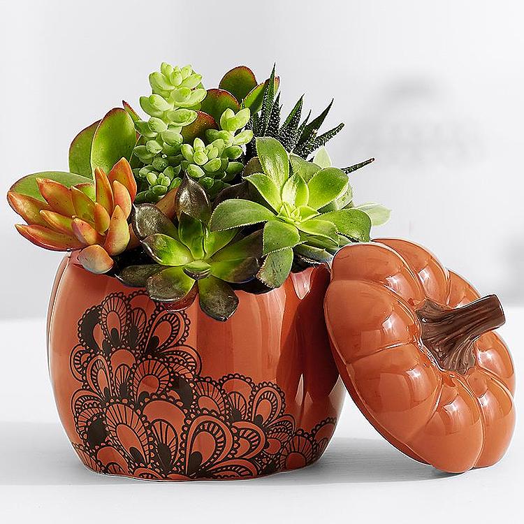 fall_pumpkin_spiced_succulents_hostess_gift