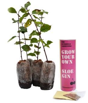 original_grow-your-own-sloe-gin-kits