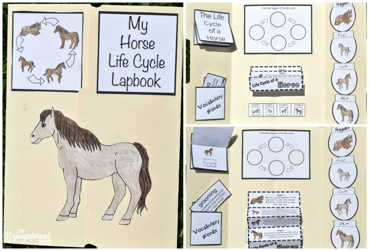 Horse Life Cycle Printable Lapbook Project For Kids