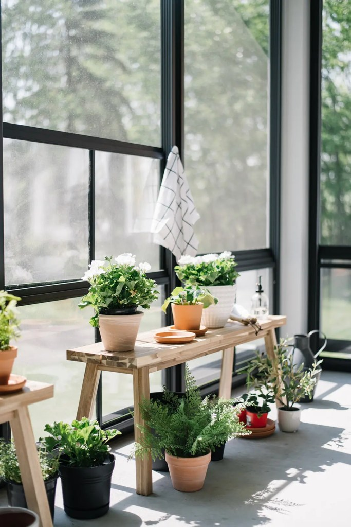 The sunroom acts as a greenhouse at The Ginger Home