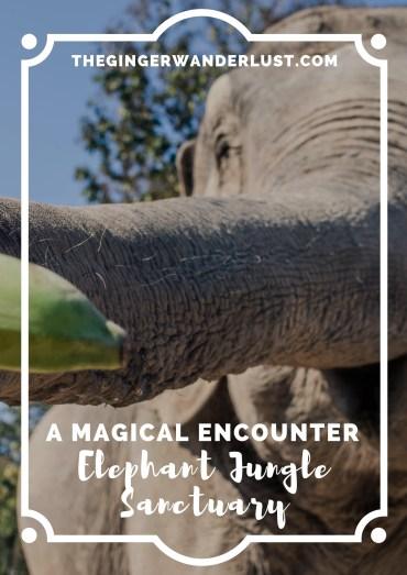 thailand elephant pin