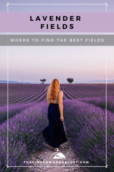The Region of Provence in the South East of France is full of lavender fields, and you won't have to look hard to find them in June and July. However there are definitely fields which are more photogenic than others. If you are after a perfect Instagram photo keep reading to find out where you can find the best lavender fields in Provence.