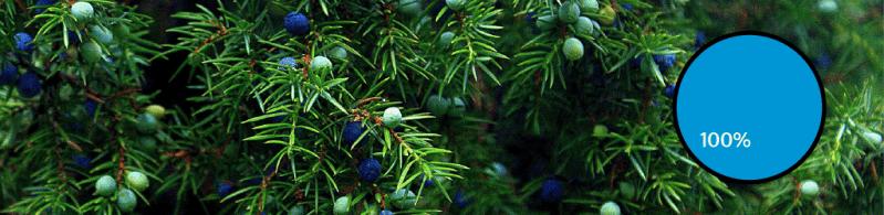 Top 10 Gin Botanicals: #1 Juniper
