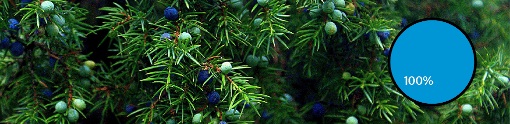 Top 10 Gin Botanicals: #1 Juniper