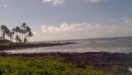 kauai beach poipu palm trees