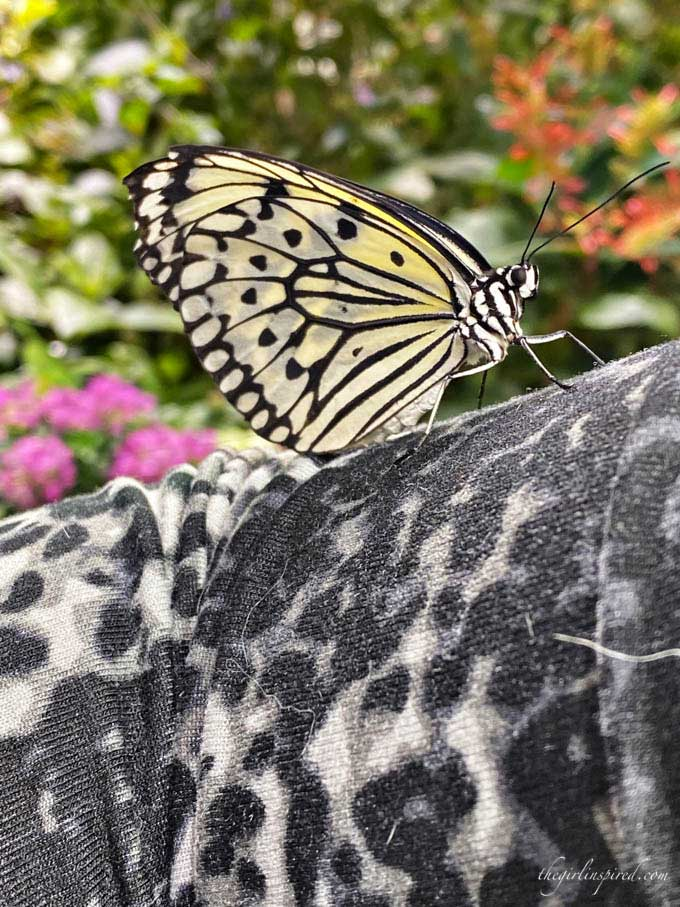 Close-up of yellow and black butterfly resting on leopard print shirt sleeve with flower garden in the background.