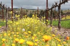 Flowers in Vinyard
