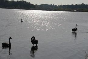 The lake in Mito