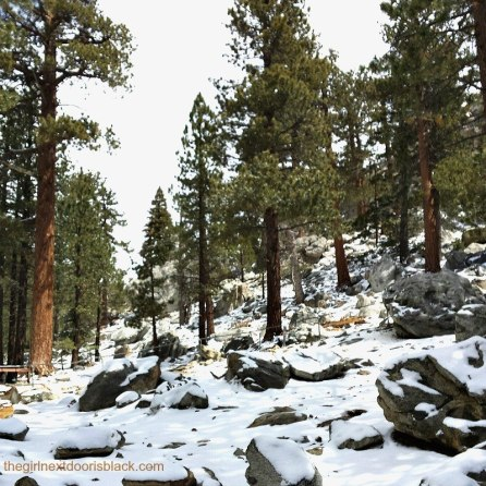"Pine Trees in Mt. San Jacinto State Park | From poolside underneath palm trees in the bright California sun, to fine dining at an award-winning restaurant, to a snowy nature to walk: Inside a fun-filled ""roaring 20s"" themed bachelorette weekend in Palm Springs, read more in ""Bachelorette Weekend in Palm Springs "" on The Girl Next Door is Black"