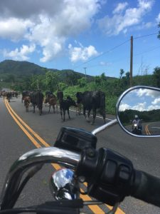 The girl on a bike dominican republic dominican riders harley davidson cattle e1510916441282