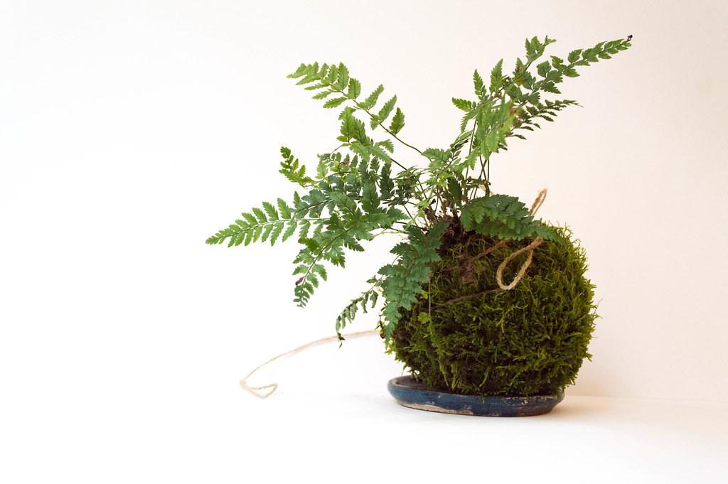 Wreath making Kit