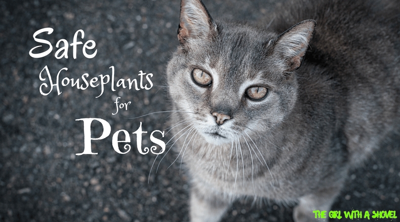 Safe Houseplants For Pets The Girl With A Shovel
