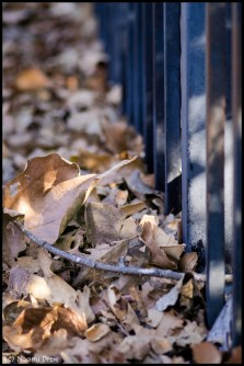 Leaves Along the Fence