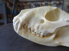 Luke Jerram Day 1 - Skull