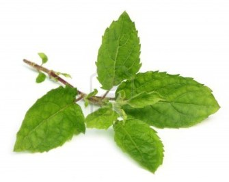 Researchers Discover That The Tulsi Plant Can Be Used To Remove Fluoride From Drinking Water