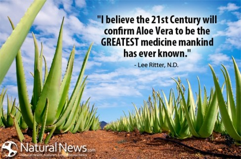 Aloe Vera Quote - Lee Ritter N.D.
