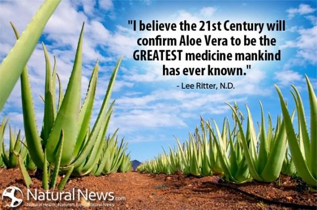 Aloe Vera Quote - Lee Ritter N.D.