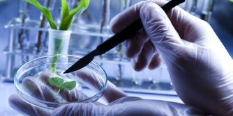 More Scientists Expose Government Fraud over GMOs