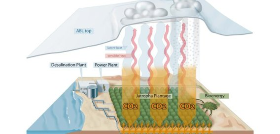 Processes involved in carbon farming (Credit: Becker et al. 2013)